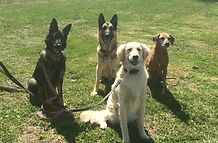 Hampton Roads Dog Training Service Dogs Search and Rescue Pet Search Boot Camps Boarding Group Classes Canine Legal Consultations Behavior Modification Agility Conformation Apprentice Training Hampton Roads Chesapeake Hickory VA Beach Norfolk
