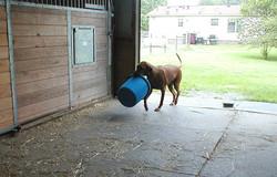 Keno with blue bucket.jpg