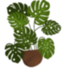 cheeseplant.png
