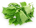 parsley copy.png