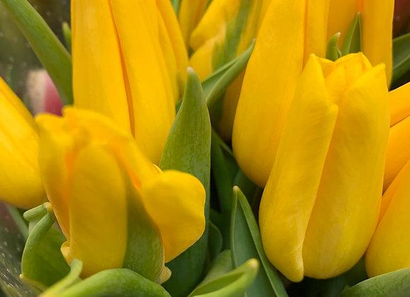Тюльпан Желтый Голландия