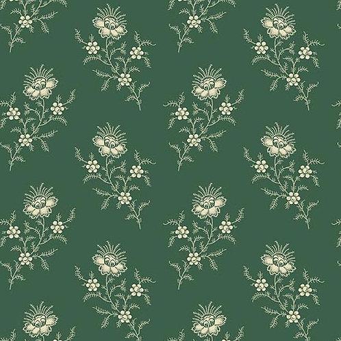 Spruce Fern