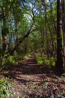 tall_tree_path