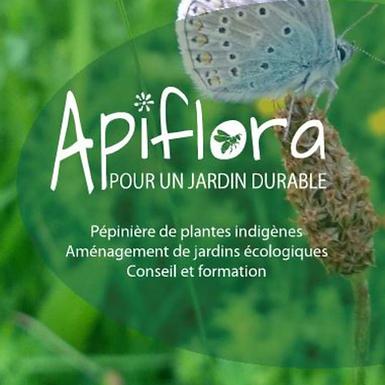 Allaria petiolata - Aliaire