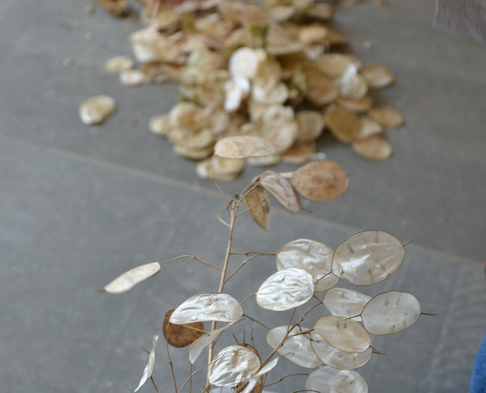 Triage des semences