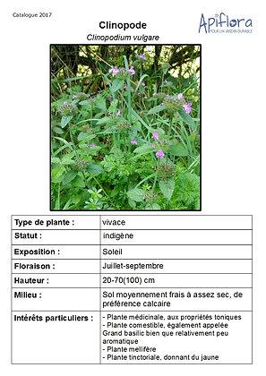 Clinopodium vulgare - Clinopode , Grand basilic
