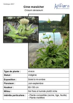 Cirsium-oleraceum.jpg