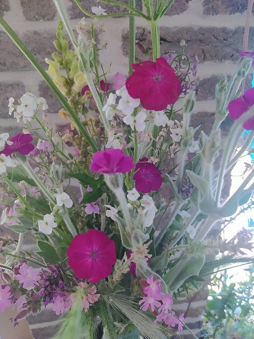 Lychnis coronaria - Coquelourde des jardins