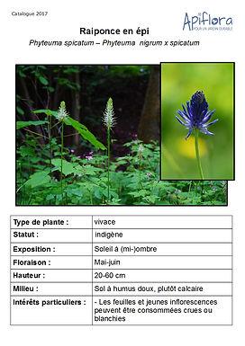Phyteuma nigrum - Raiponce bleue