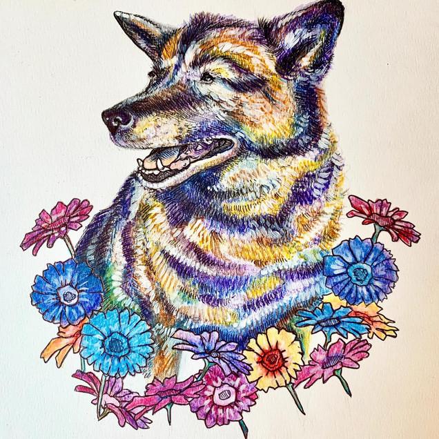 "Watercolor pencils on paper 9"" x 12"""