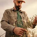 Farmer checking oats in feild.jpg