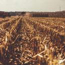 Fall corn harvest.jpg