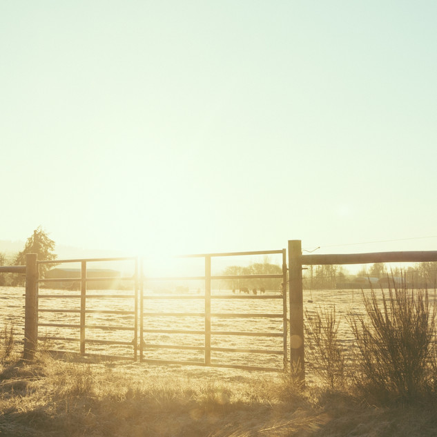 Rustic country fence.jpg