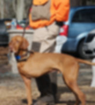 Tripawd Vizsla Bart and Wounded Warriors