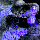 Screen Shot 2020-03-19 at 11.48.48 AM.pn