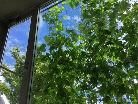 植物で夏の暑さ対策