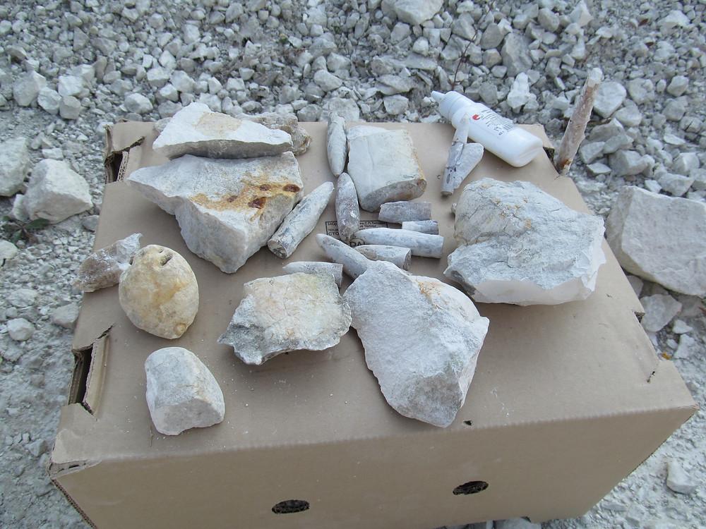 Разнообразие окаменелостей