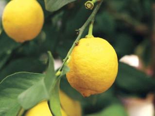 Super Sour Lemons!