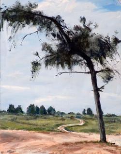 The_Lonley_Tree