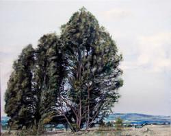 60X40 עצים בעמק