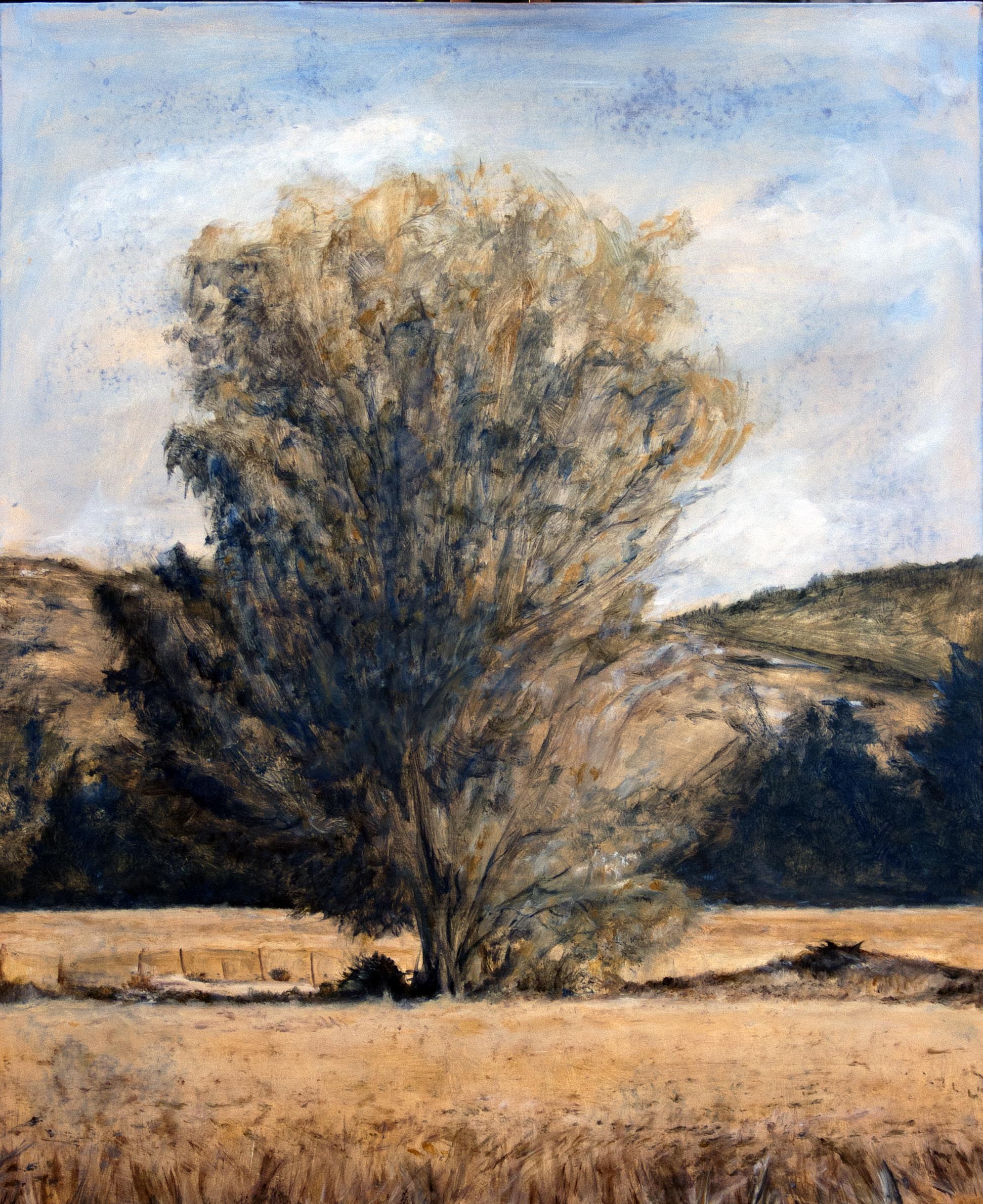 אקליפטוס בשדות