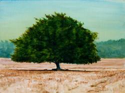 העץ בשדות חריש - אסף רודריגז