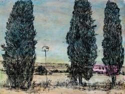 ברושים בשדות משמר העמק - אסף רודריגז