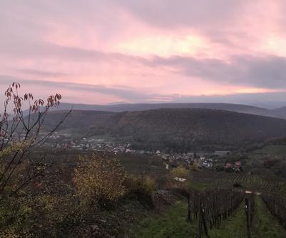 L'hiver dans le vignoble alsacien