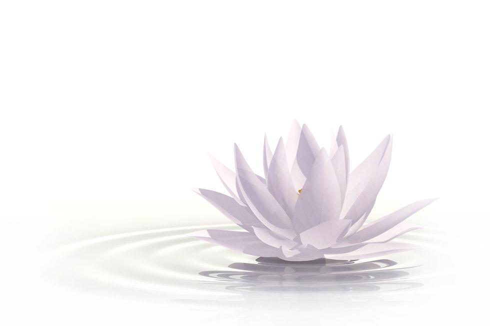 homepage-lotus.jpg