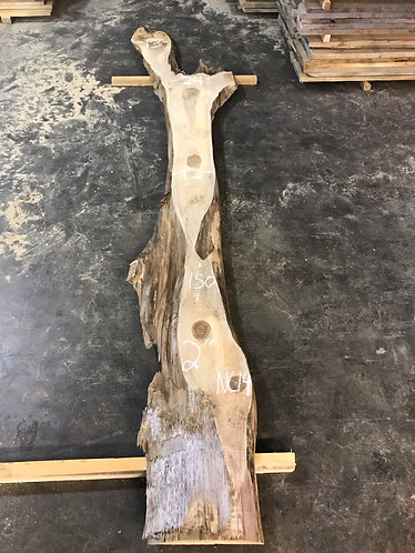 New Cypress NC14