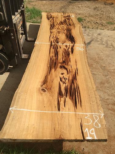 Sinker Cypress #19
