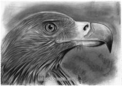 aguia_luciano-soares