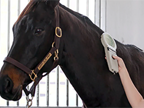 Why Microchip Your Horse?