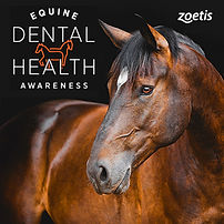 Zoetis Dental Awareness Campaign Social
