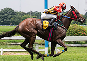 The Equine Heart (Part 1): What Makes the Horse Such an Amazing Athlete?
