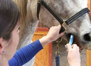 Deworming Programs – One Size Does Not Fit All
