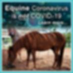 EDCC COVID-10 vs Equine Coronavirus LO.p
