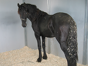 Equine Colic: What to Expect