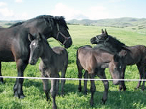 A Mare Owner's Countdown to Breeding