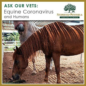 AOV-Equine Coronavirus and Humans.jpg
