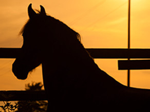Maximizing the Golden Years: Care for the Aging Horse