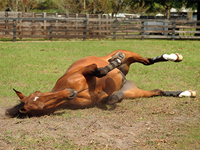 Colic Questions Answered