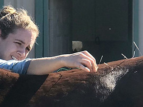 The Benefits of Acupuncture in Horses