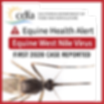 Equine West Nile Virus-Web-News.png