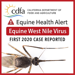 Equine West Nile Virus-Web-News.png