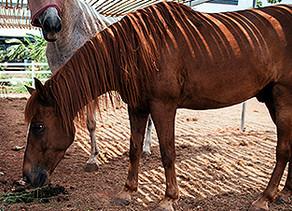 Equine Coronavirus and Biosecurity