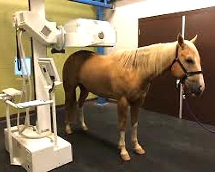 Bone Scanning Horse.png