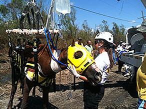 Emergency & Disaster Preparedness