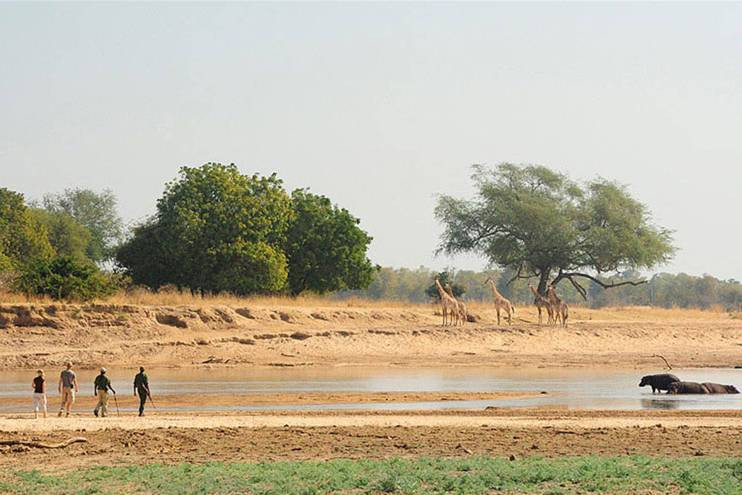 South Luangwa, Zambia. Image courtesy of Norman Carr