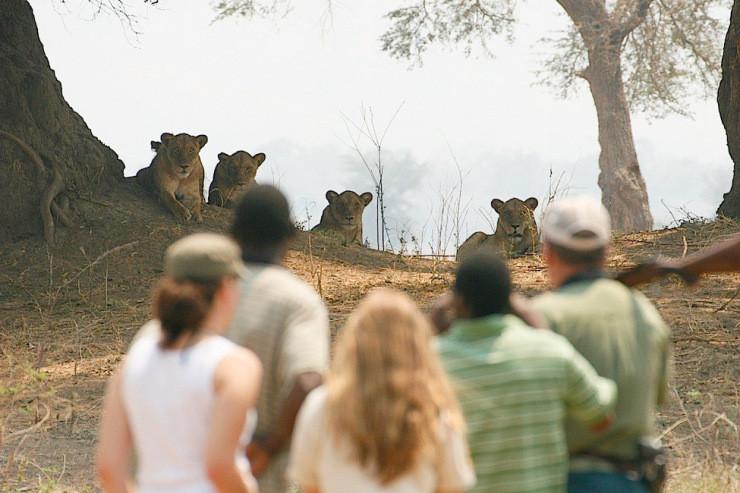 Mana Pools National Park, Zimbabwe. Thanks to Kavinga Safaris for the image.
